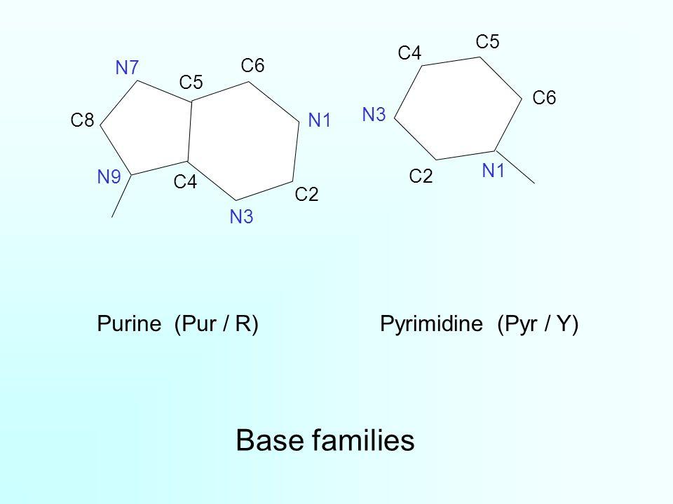 Base families Purine (Pur / R) Pyrimidine (Pyr / Y) C5 C4 N7 C6 C5 C6