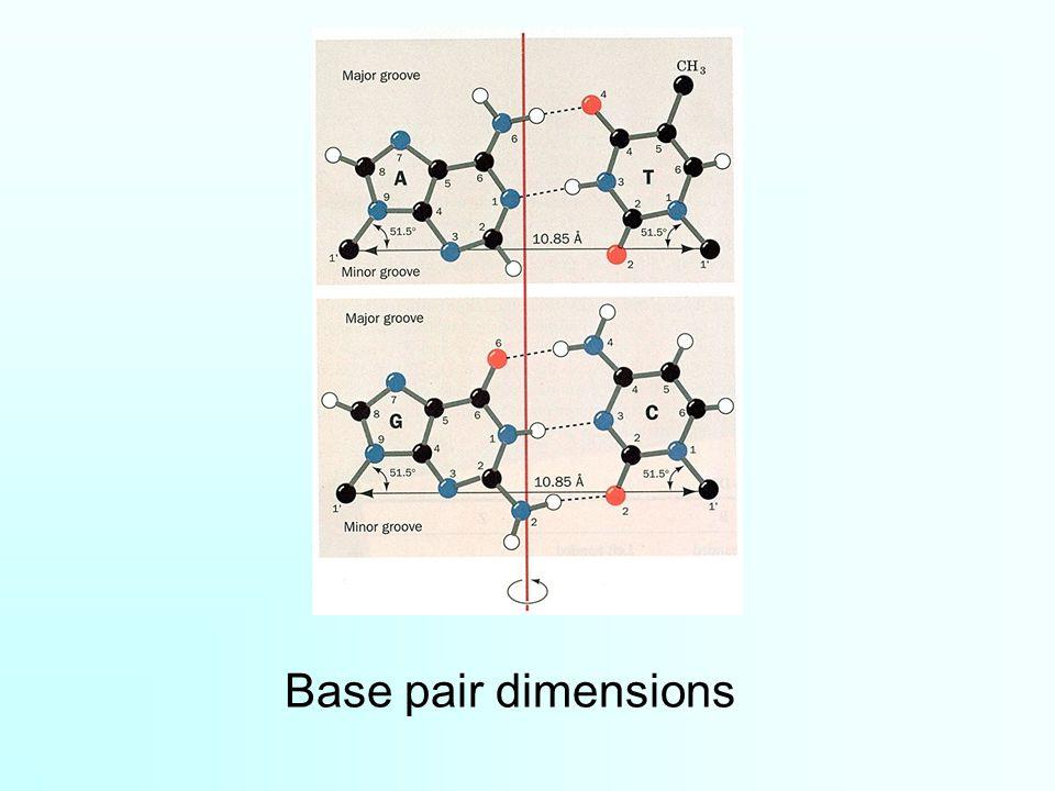 Base pair dimensions