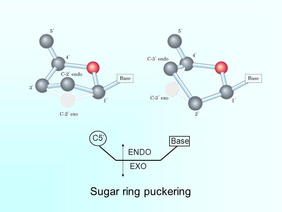 C5' ENDO EXO Base Sugar ring puckering