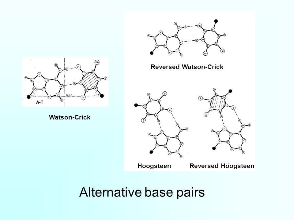 Alternative base pairs