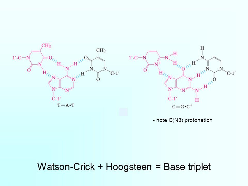 Watson-Crick + Hoogsteen = Base triplet