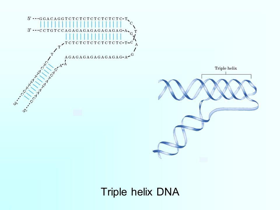 Triple helix DNA