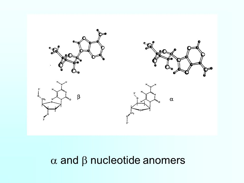 a and b nucleotide anomers