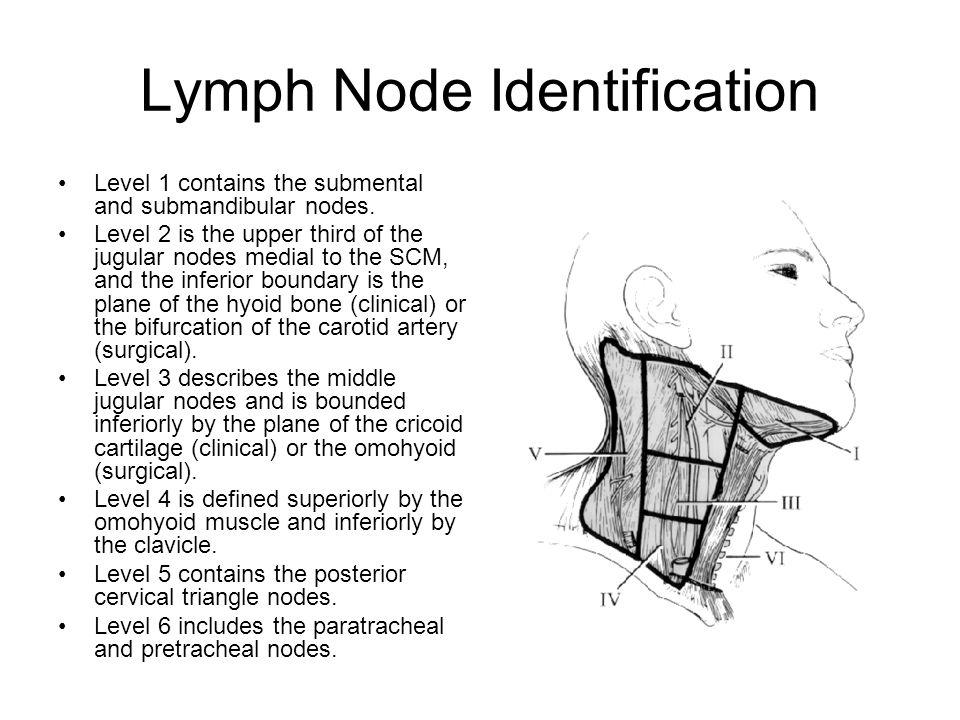 Lymph Node Identification