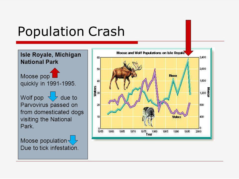 Population Crash Isle Royale, Michigan National Park Moose pop