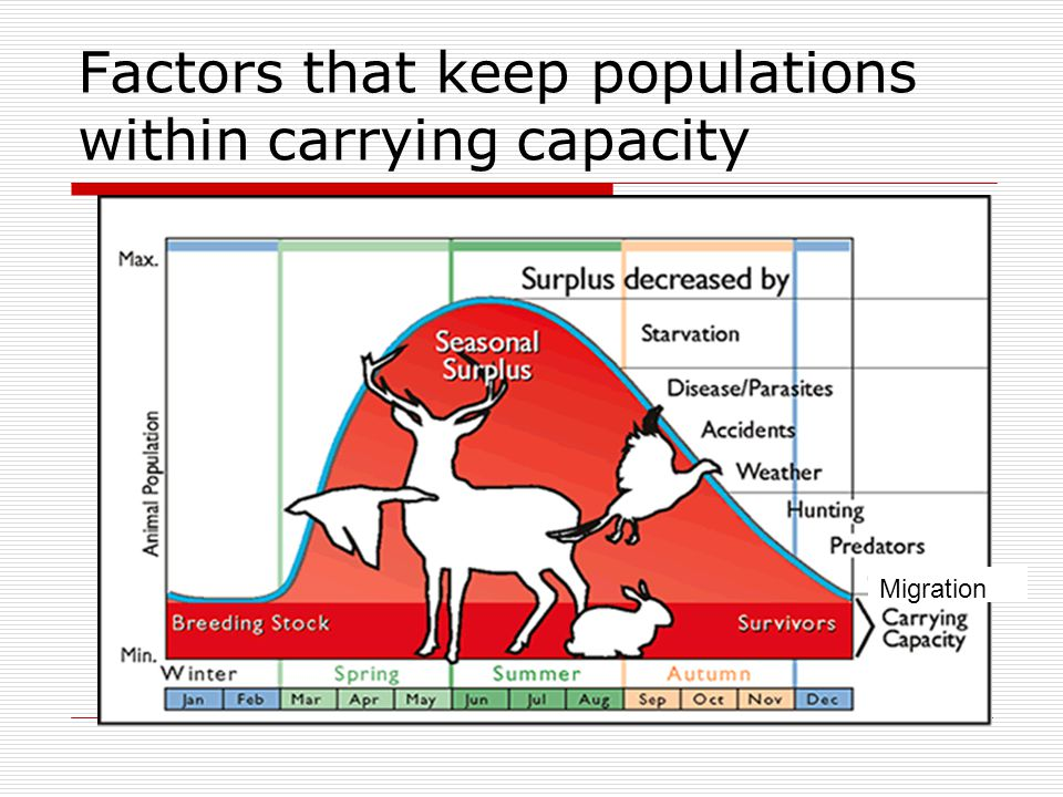 Factors that keep populations within carrying capacity