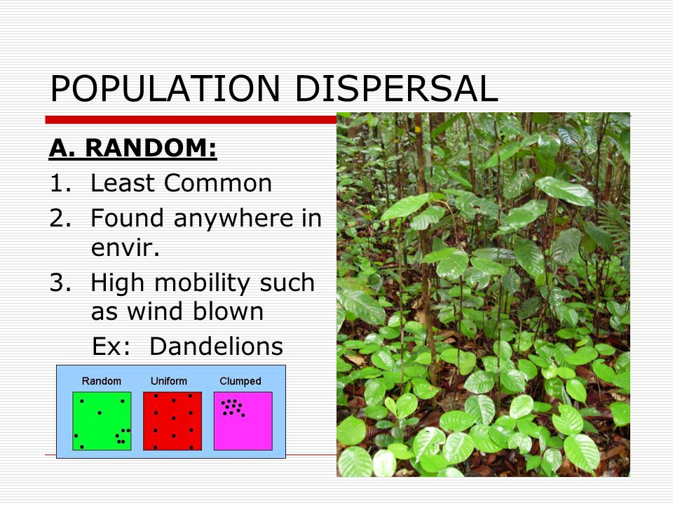 POPULATION DISPERSAL A. RANDOM: 1. Least Common
