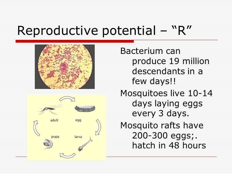 Reproductive potential – R