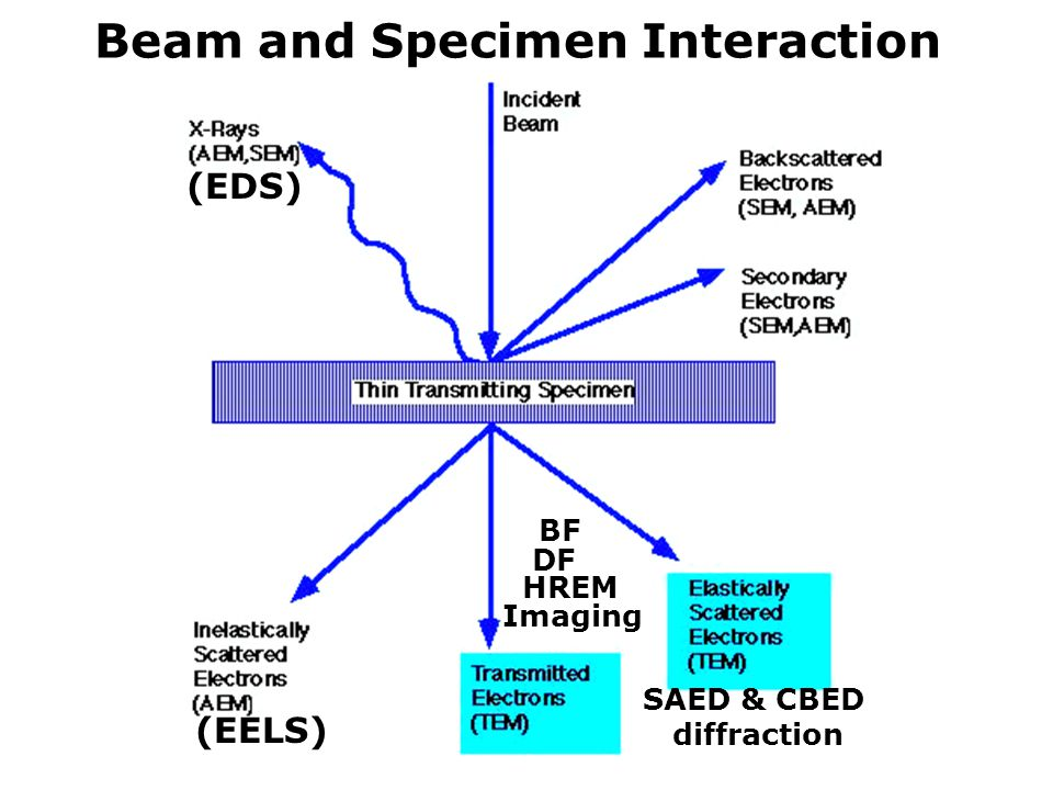 Beam and Specimen Interaction