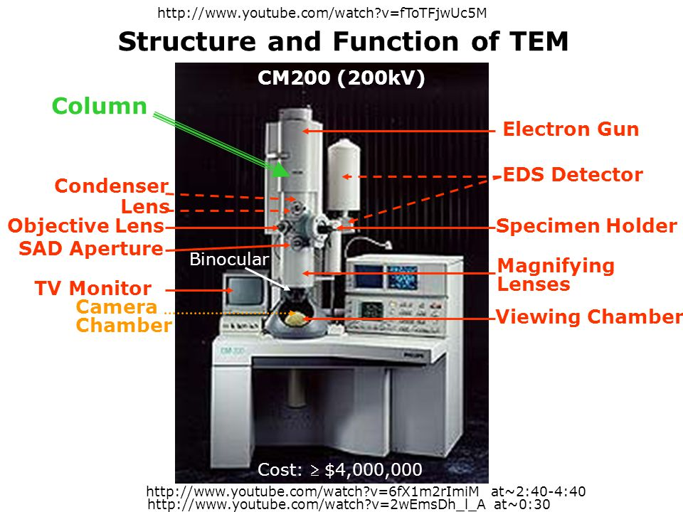 Structure and Function of TEM