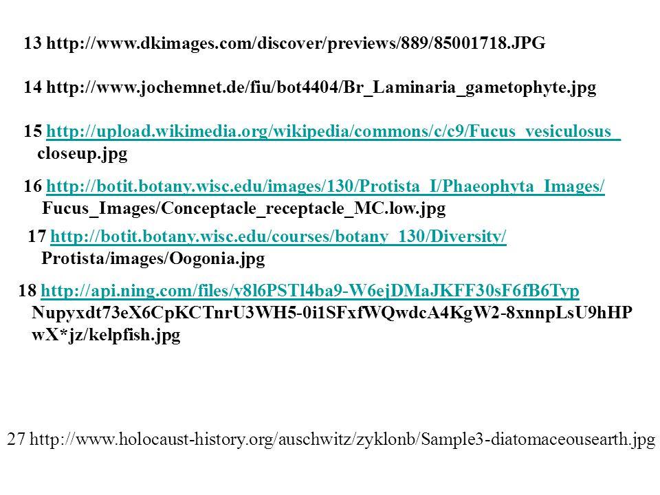 13 http://www.dkimages.com/discover/previews/889/85001718.JPG
