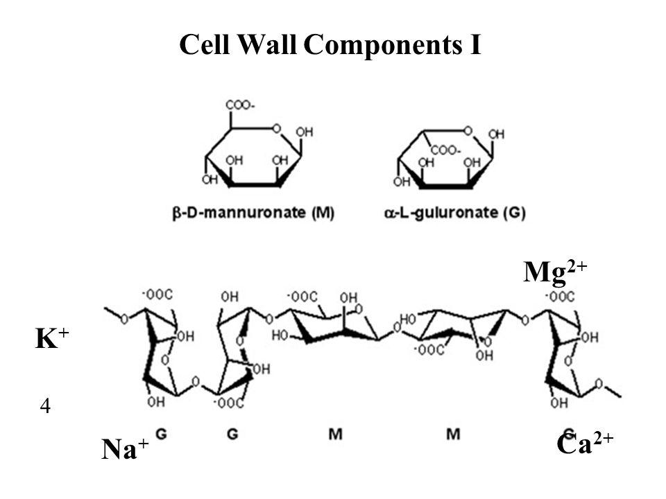 Cell Wall Components I Mg2+ K+ 4 Ca2+ Na+