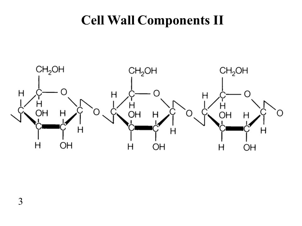 Cell Wall Components II