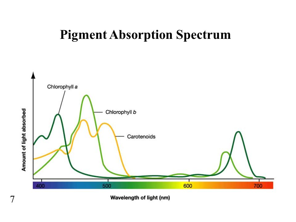 Pigment Absorption Spectrum