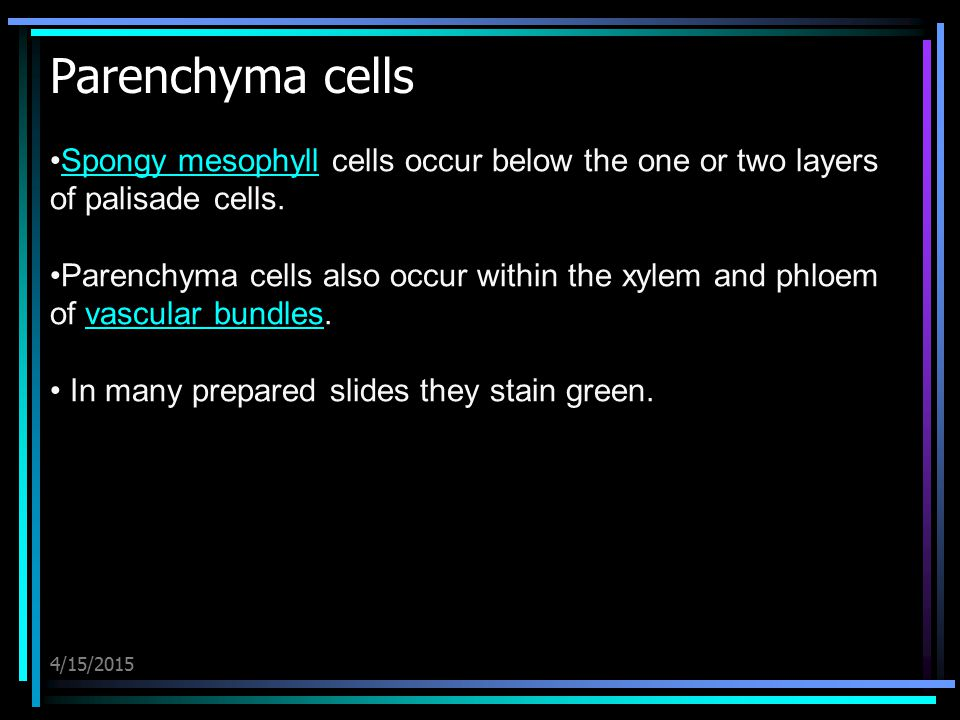 Parenchyma cells Spongy mesophyll cells occur below the one or two layers of palisade cells.