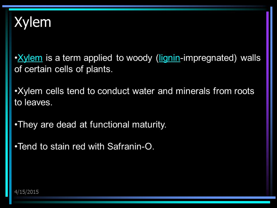 Xylem Xylem is a term applied to woody (lignin-impregnated) walls of certain cells of plants.