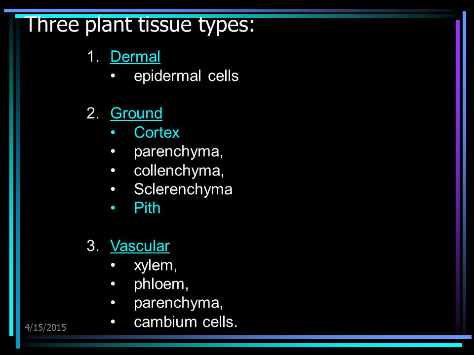 Three plant tissue types: