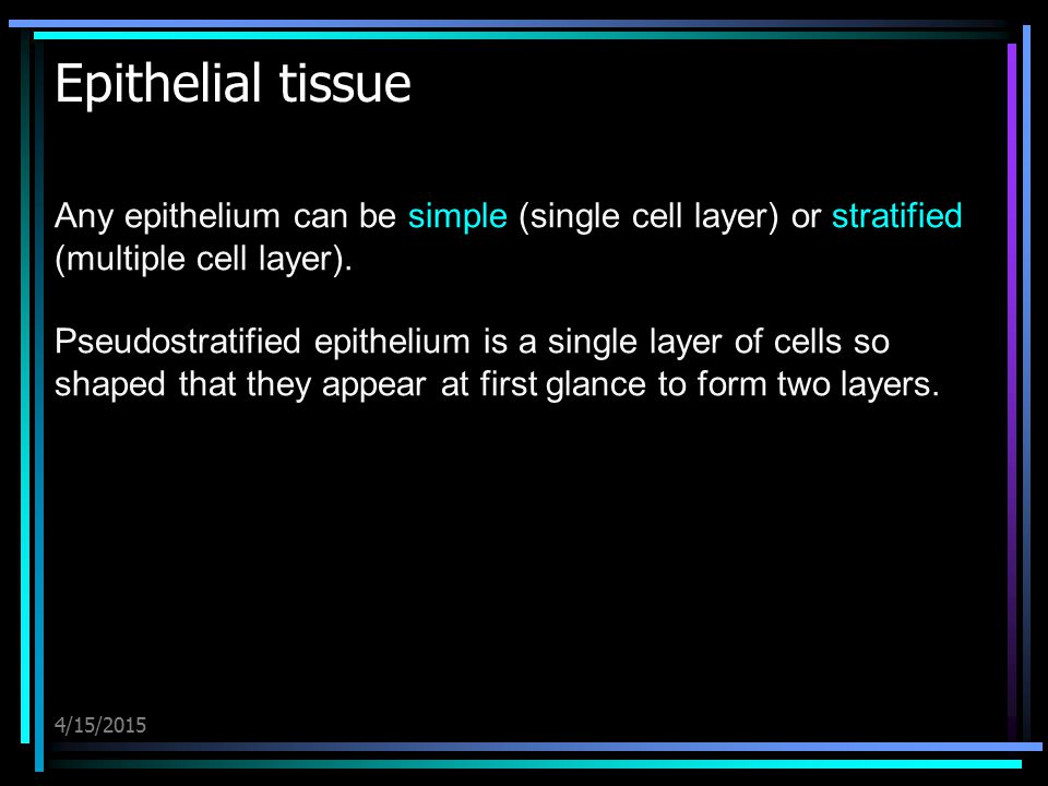 Epithelial tissue Any epithelium can be simple (single cell layer) or stratified (multiple cell layer).