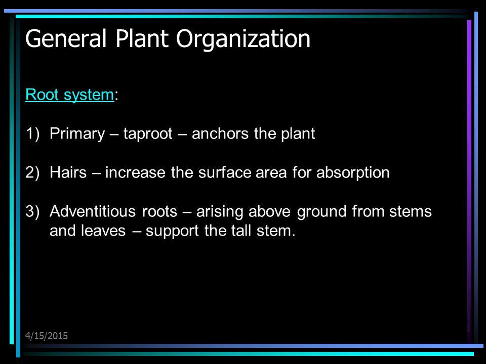 General Plant Organization