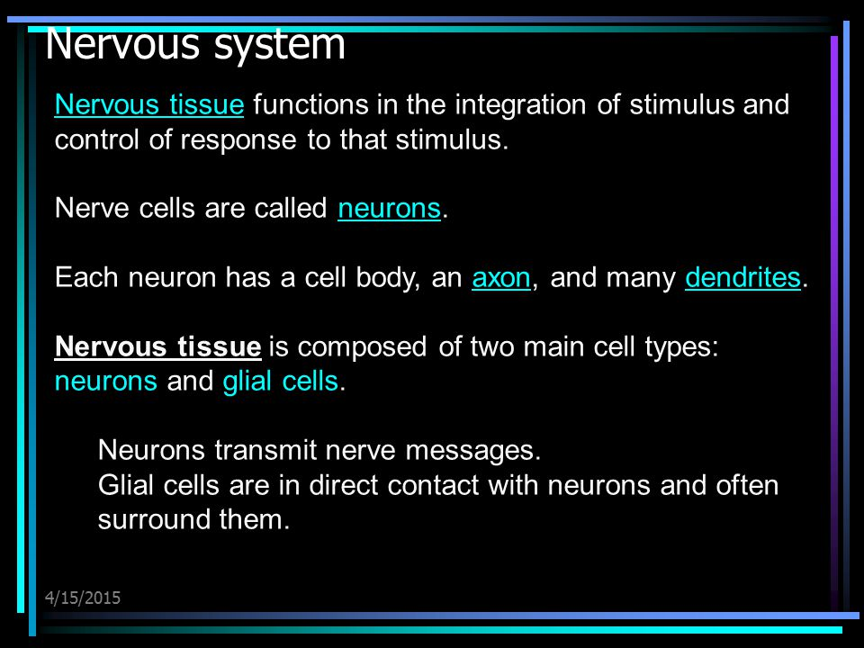 Nervous system Nervous tissue functions in the integration of stimulus and control of response to that stimulus.