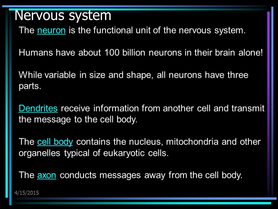 Nervous system The neuron is the functional unit of the nervous system. Humans have about 100 billion neurons in their brain alone!