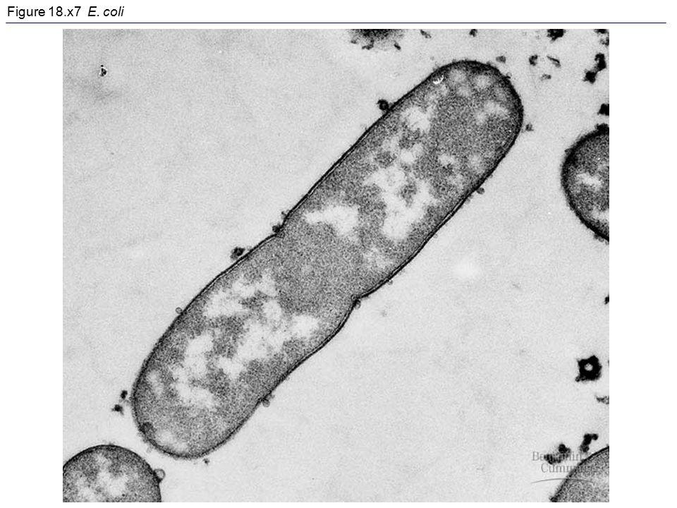 Figure 18.x7 E. coli