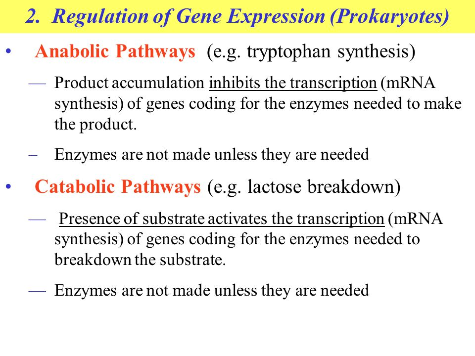 2. Regulation of Gene Expression (Prokaryotes)