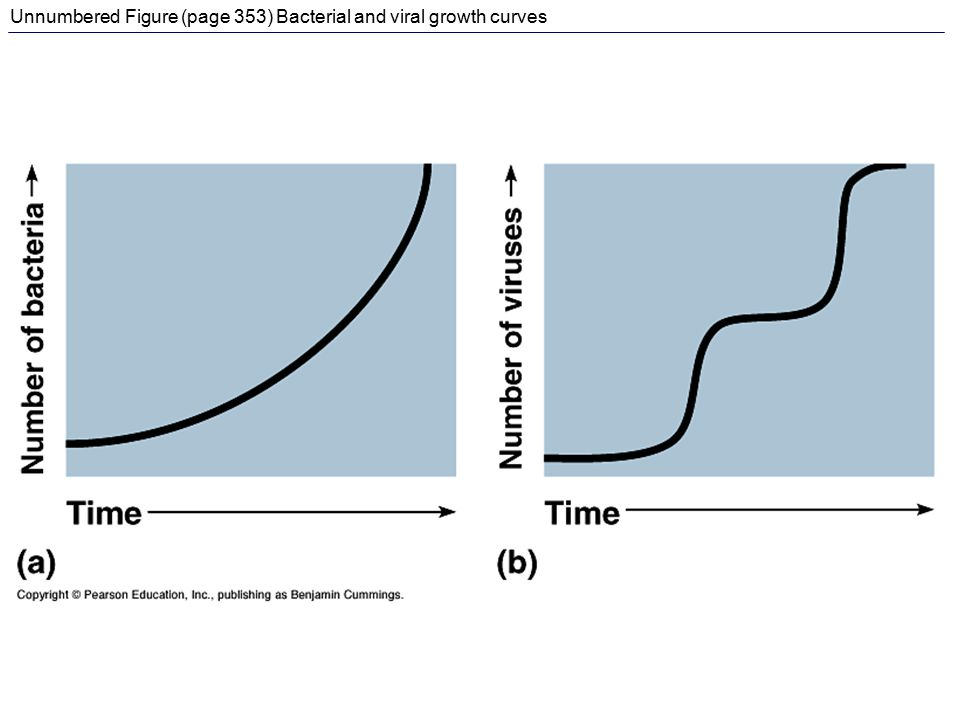 Unnumbered Figure (page 353) Bacterial and viral growth curves