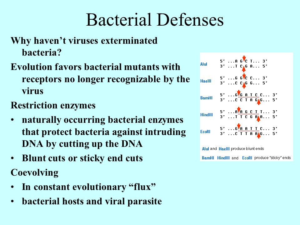 Bacterial Defenses Why haven't viruses exterminated bacteria