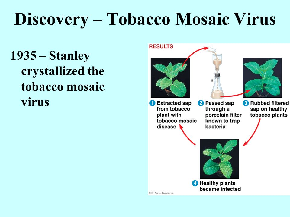 Discovery – Tobacco Mosaic Virus