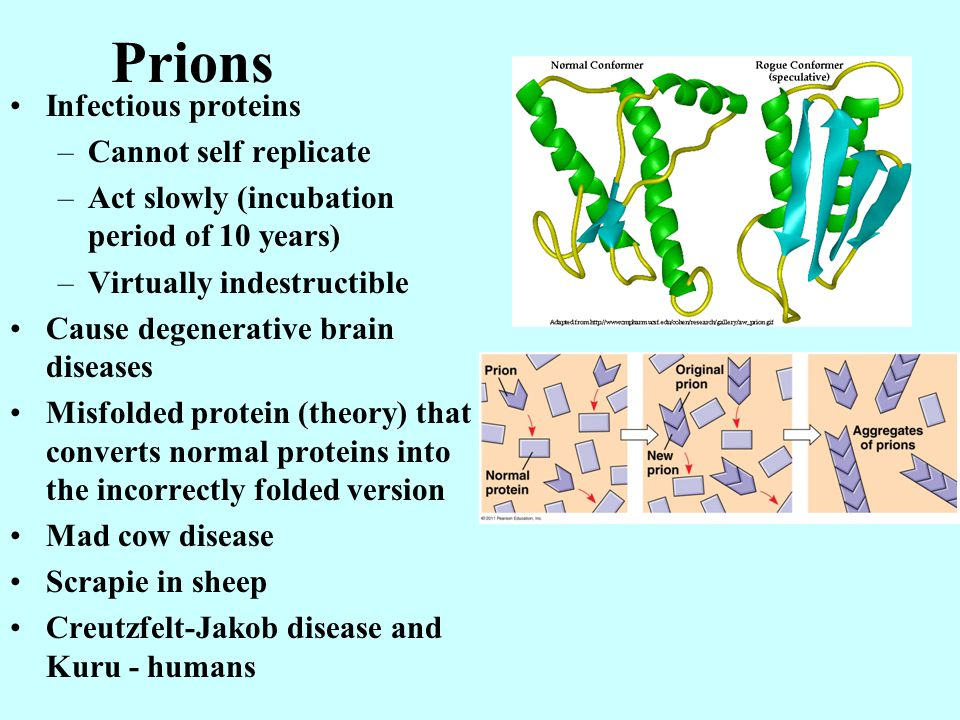 Prions Infectious proteins Cannot self replicate