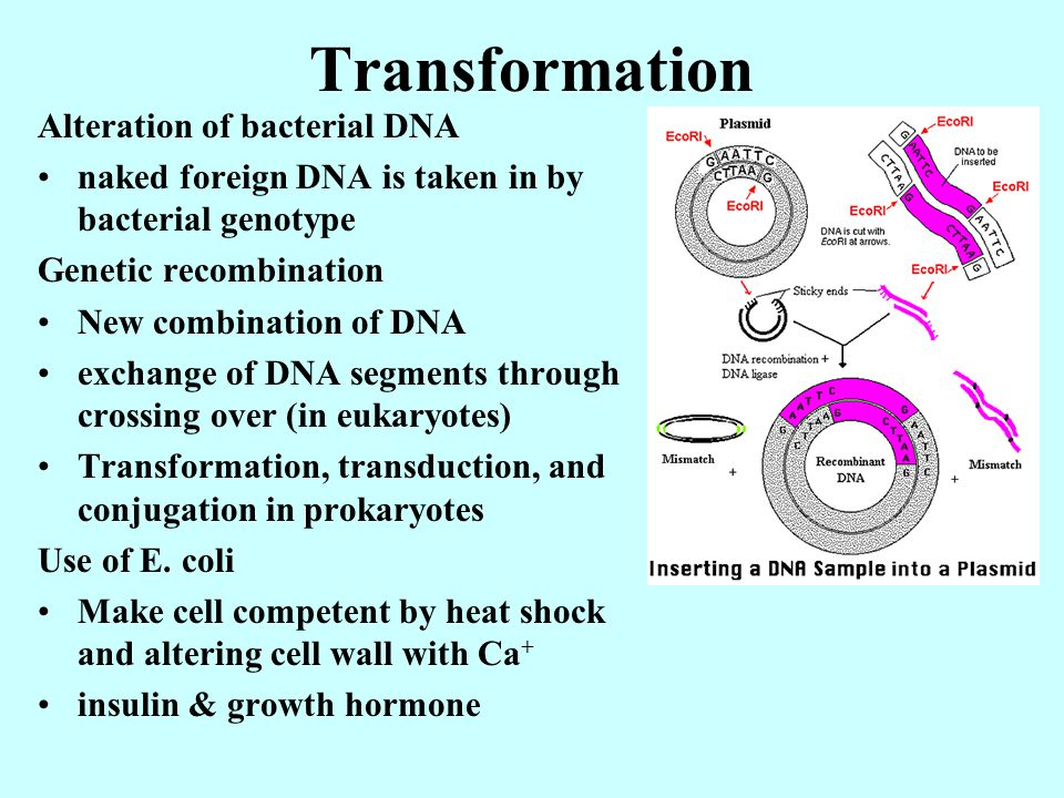 Transformation Alteration of bacterial DNA