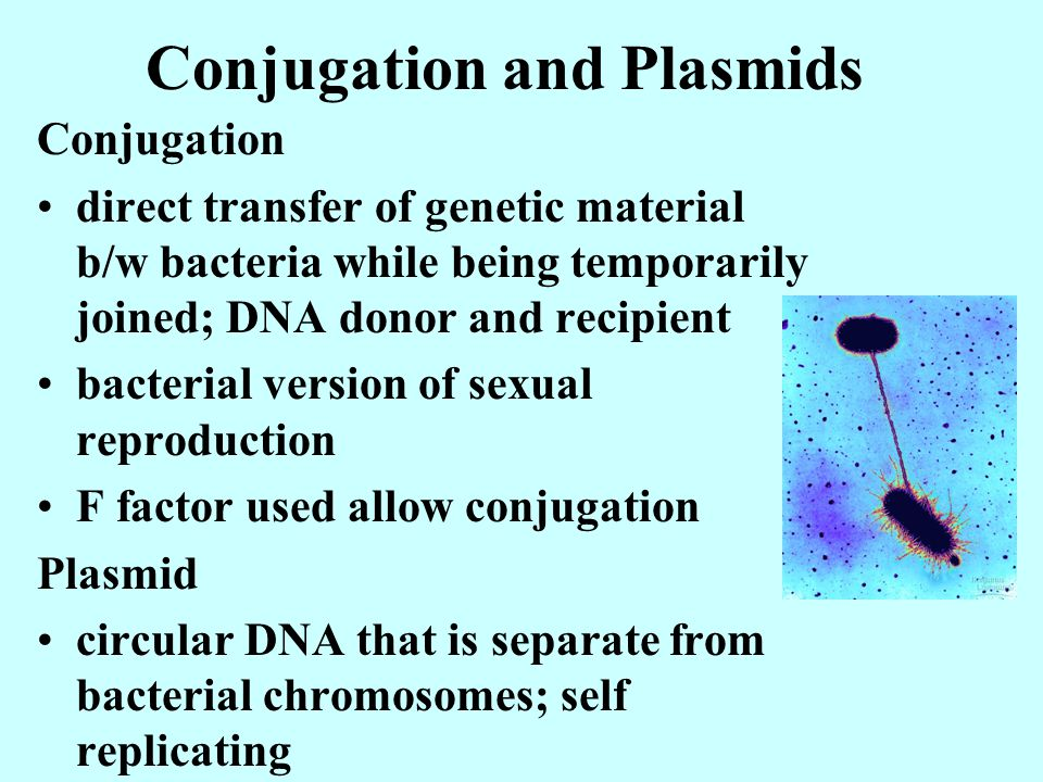 Conjugation and Plasmids