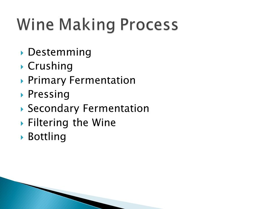 Wine Making Process Destemming Crushing Primary Fermentation Pressing