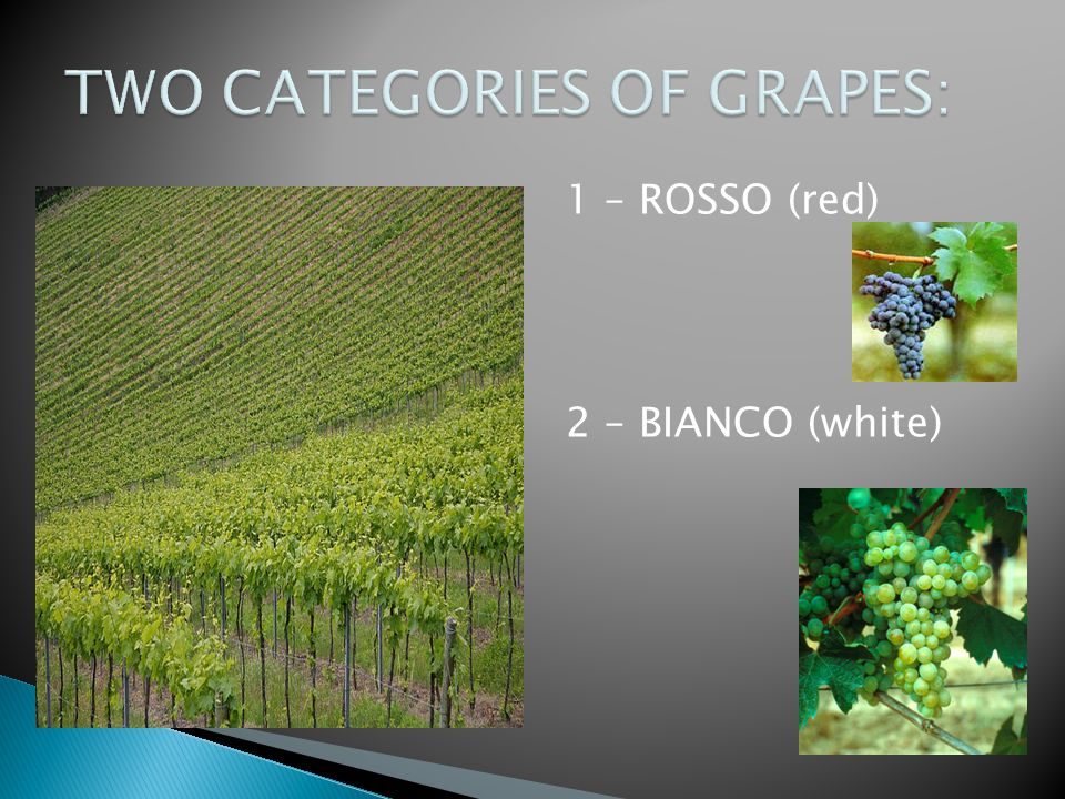 TWO CATEGORIES OF GRAPES: