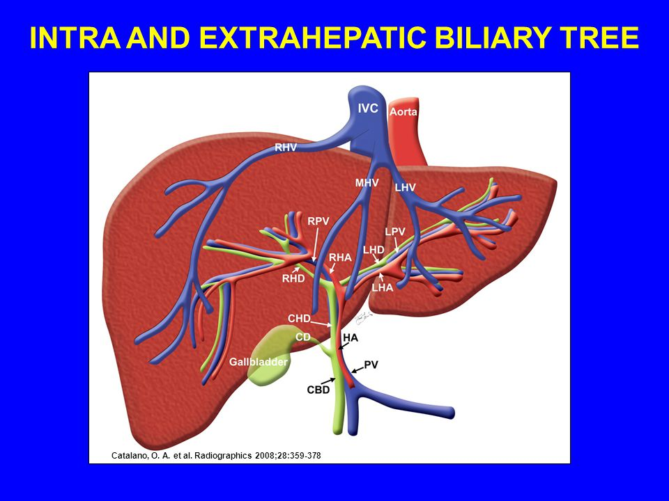INTRA AND EXTRAHEPATIC BILIARY TREE