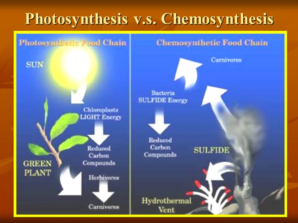 Photosynthesis v.s. Chemosynthesis