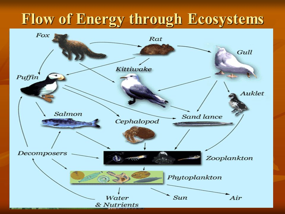 Flow of Energy through Ecosystems