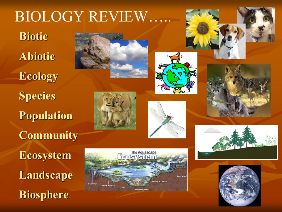 BIOLOGY REVIEW…..