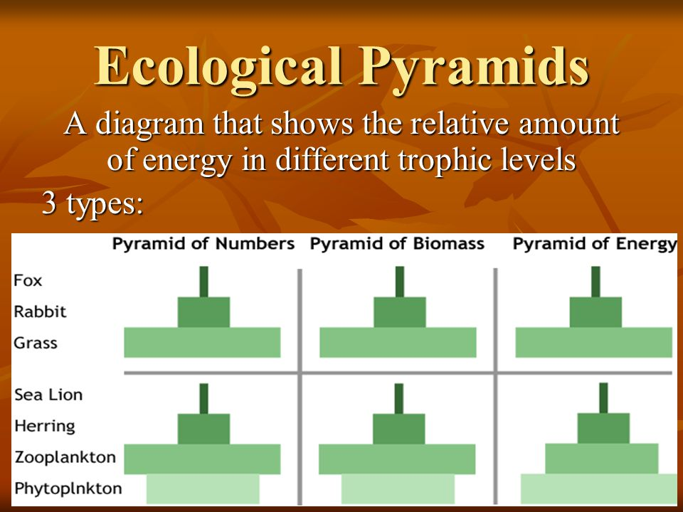 Ecological Pyramids A diagram that shows the relative amount of energy in different trophic levels.