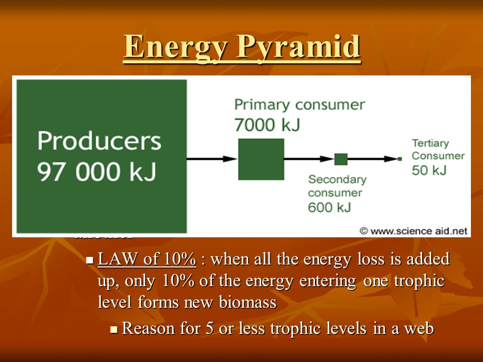 Energy Pyramid Total Energy at each trophic level