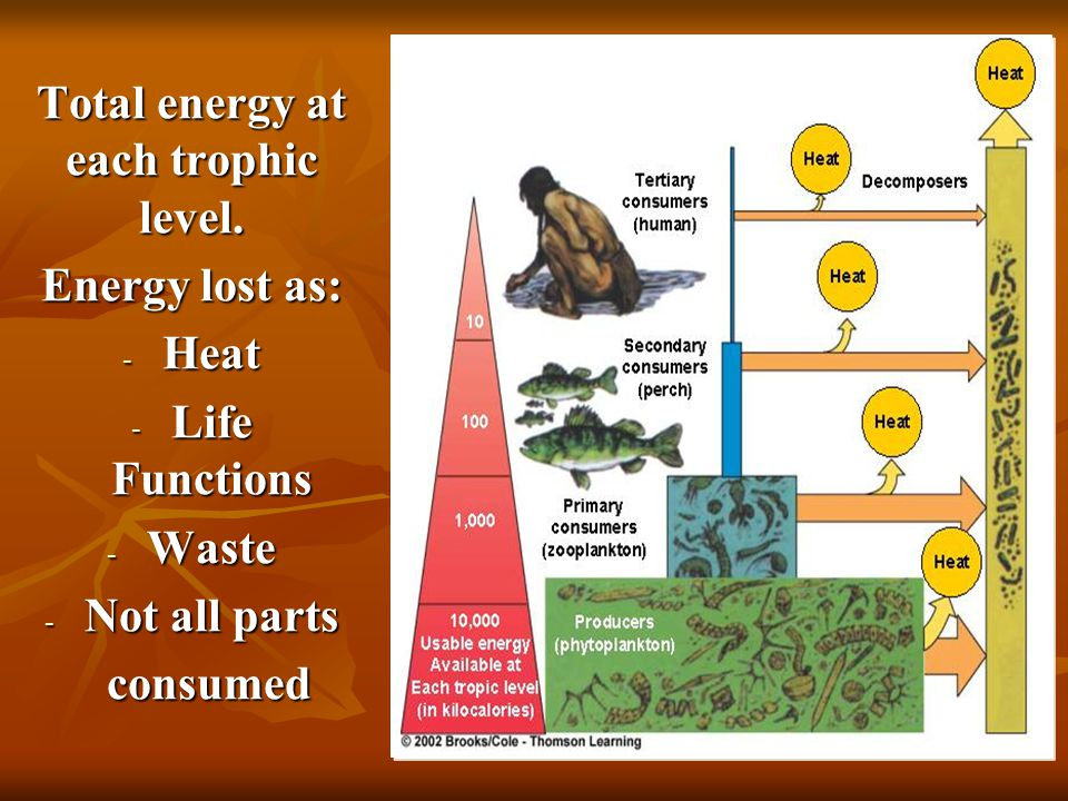 Total energy at each trophic level.