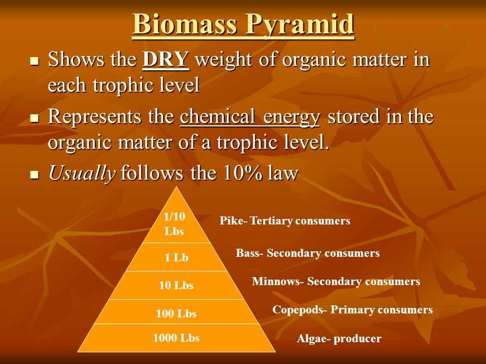 Biomass Pyramid Shows the DRY weight of organic matter in each trophic level.