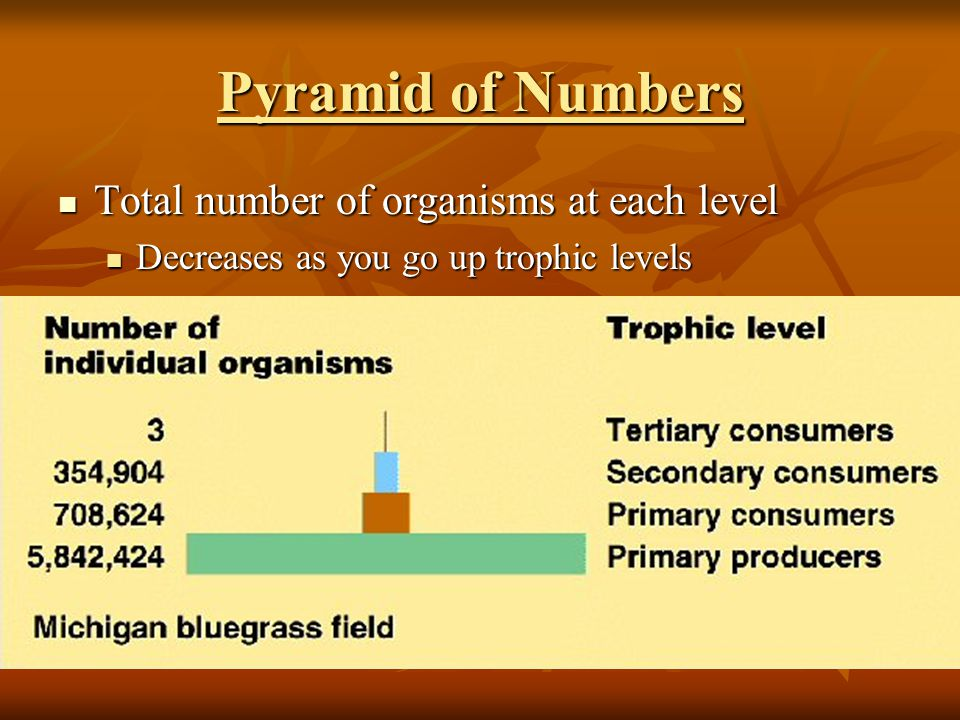 Pyramid of Numbers Total number of organisms at each level