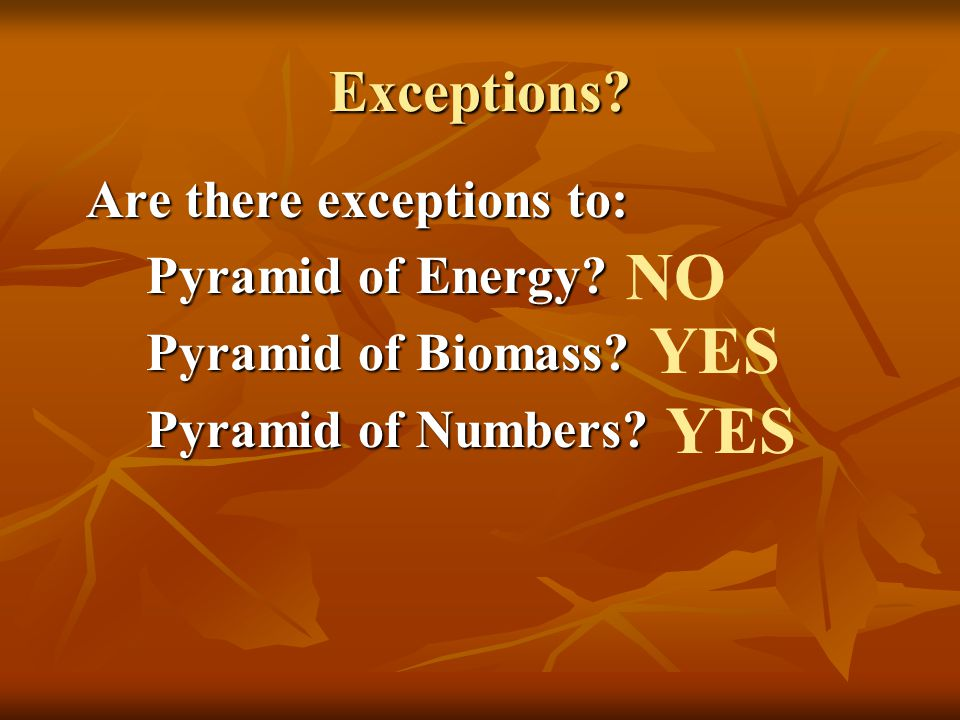 NO YES YES Exceptions Are there exceptions to: Pyramid of Energy