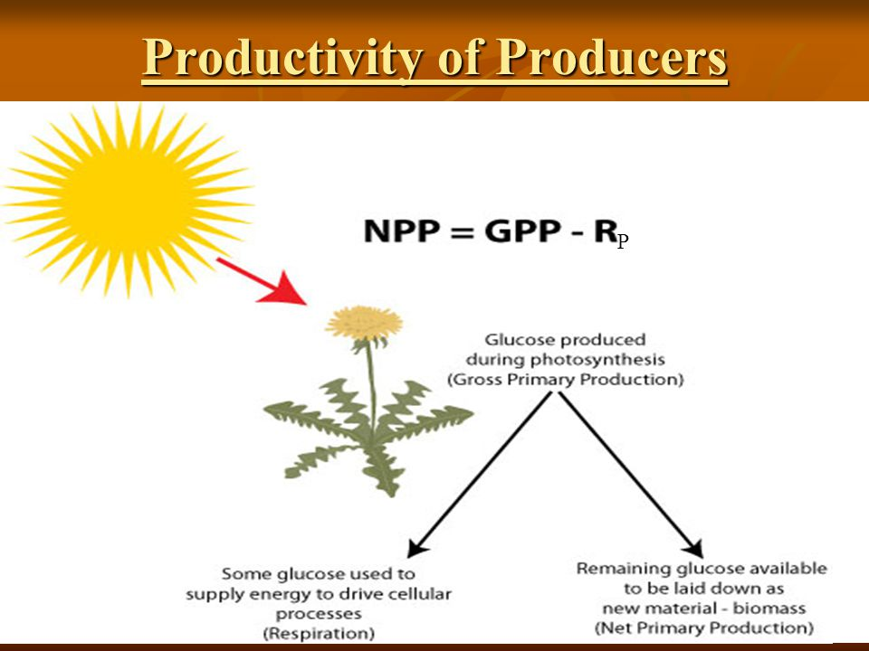 Productivity of Producers