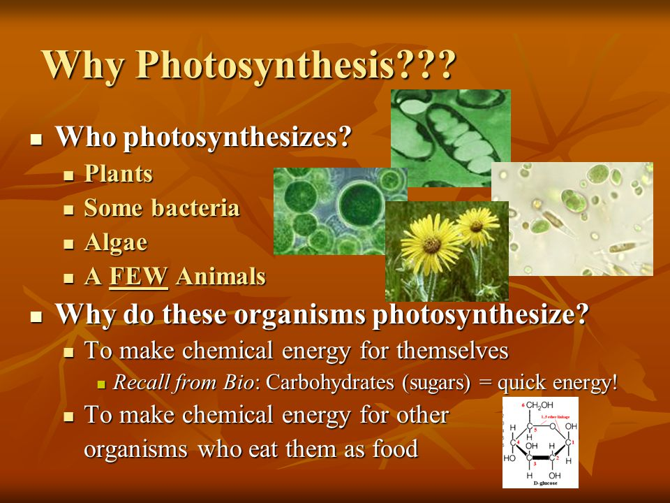 Why Photosynthesis Who photosynthesizes