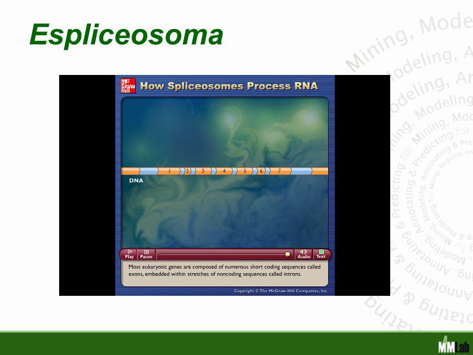 Espliceosoma