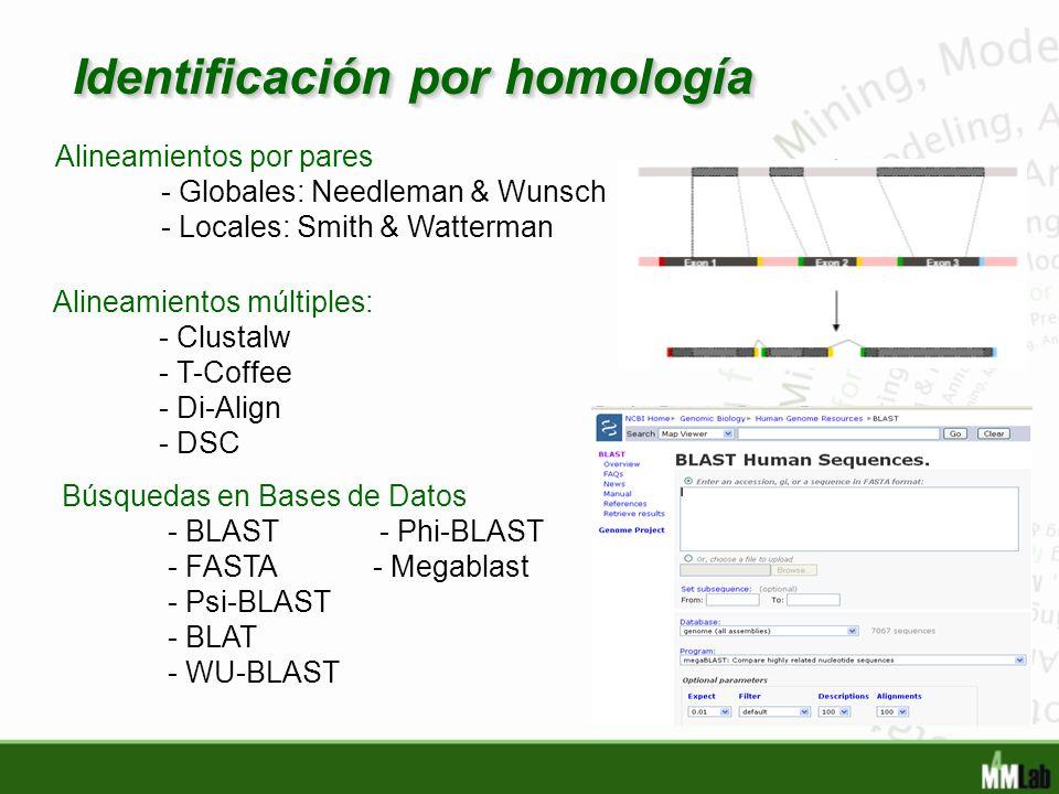 Identificación por homología