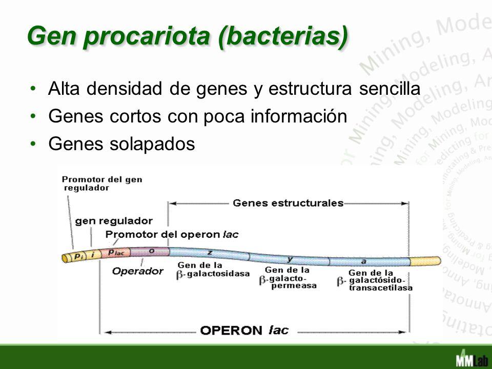 Gen procariota (bacterias)